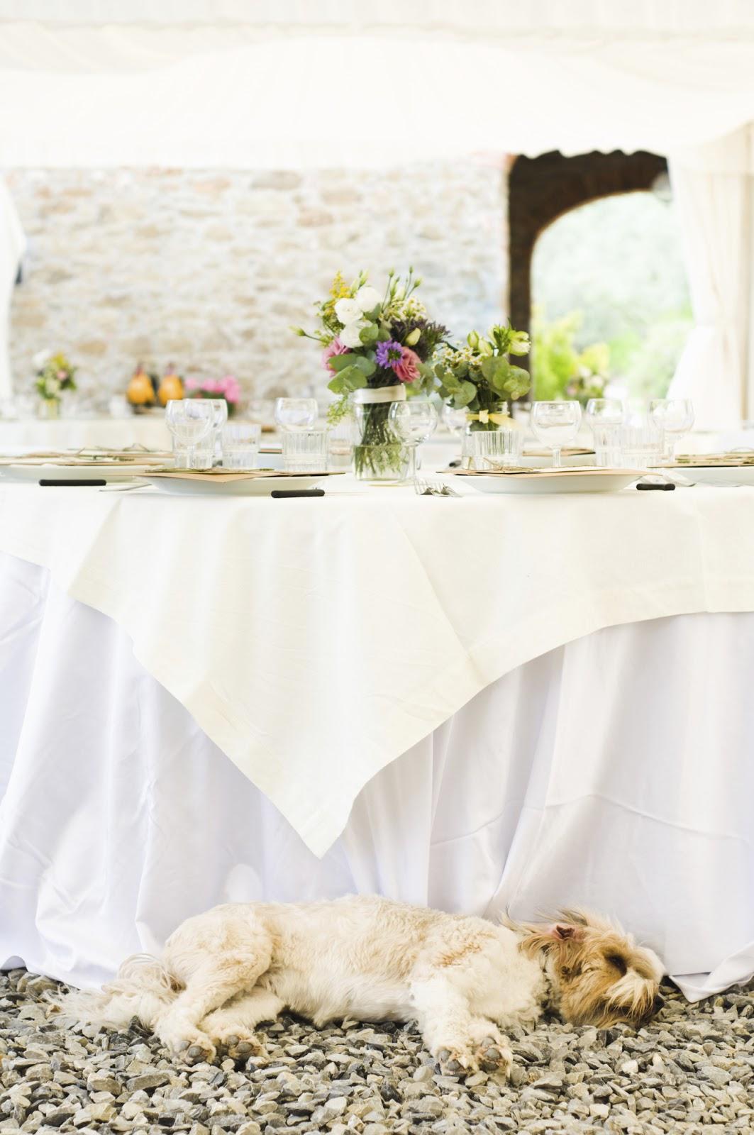 ペット同伴結婚式、4つの注意点