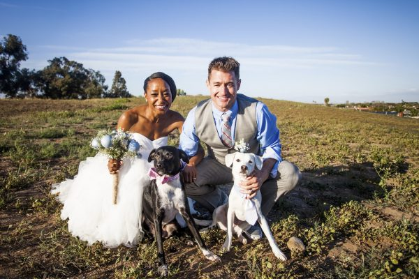 An attractive and diverse couple together on their wedding day with their dogs