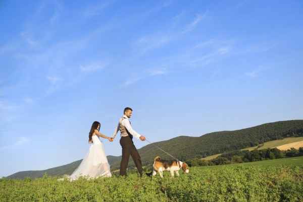 Bride and groom walk their beagle dog in the green field.