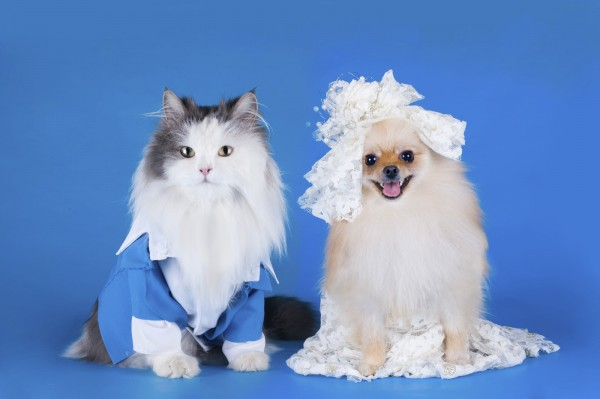 wedding photo of a cat and dog